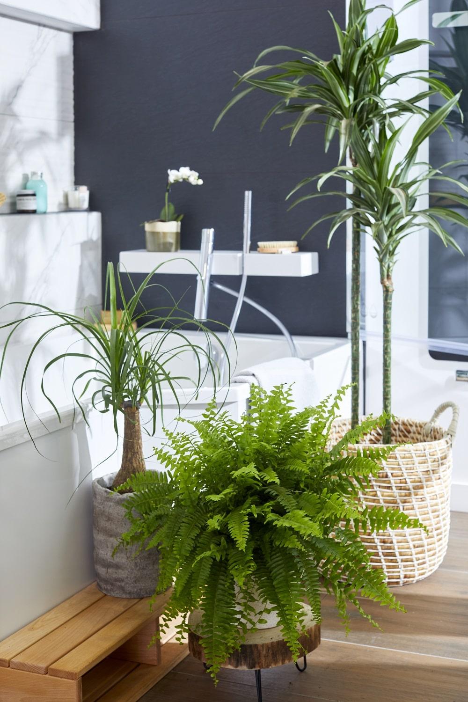 Quelle est la plante idéale pour une salle de bain ?